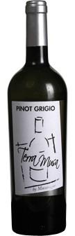 Pinot Grigio Venezia DOC 2019 Terra Musa (im 6er Karton)